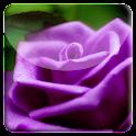 Purple Rose HD LiveWallpaper icon
