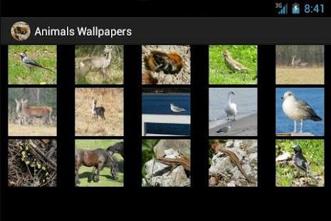 Tapety zwierzęta – miniaturka zrzutu ekranu