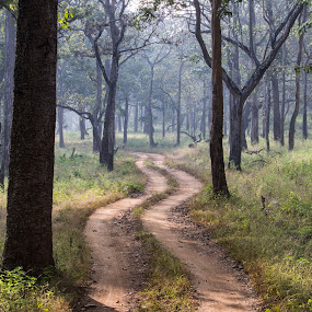 Trails in the woods by Arun Prasanna - Landscapes Forests ( #woods #forest #deep #trail #jungle )