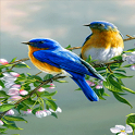 Branch Birds Live Wallpaper icon
