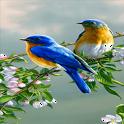 Branch Birds Live Wallpaper icon