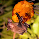 Old World Fruit Bat