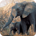 Elephants Wallpapers icon