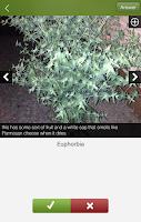 Screenshot of Plantifier