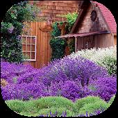 Lavender Garden Live Wallpaper