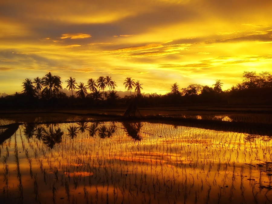 Refleksi Senja by Randi Pratama M - Instagram & Mobile Android ( mobilography, reflection, sunset, indonesia, gold, golden hour,  )