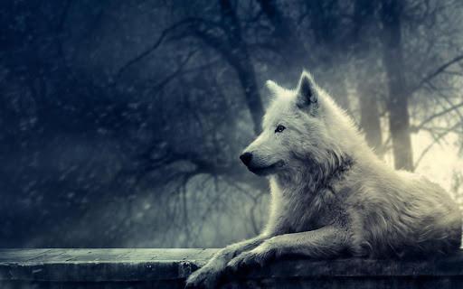 3D Wolf Wallpaper