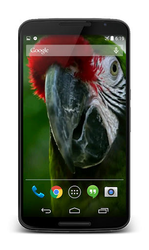 Parrot 3D Video Live Wallpaper