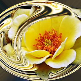 FAITH by Carmen Velcic - Digital Art Abstract ( abstract, roses, yellow, gold, flowers, digital )