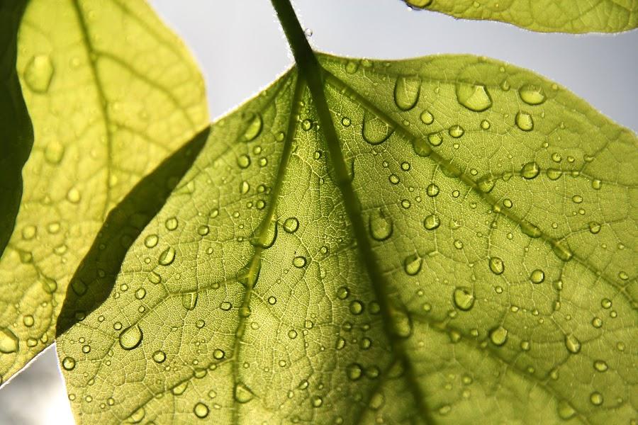 by Cornelis Cornelissen - Nature Up Close Leaves & Grasses