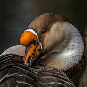 by Nando Scalise - Animals Birds