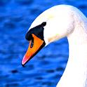 Bird Guide icon