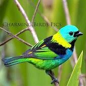 Charming Birds Pics