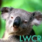 考拉lwp icon