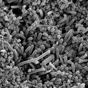 Preguntas de Bacteriologia 醫療 App LOGO-APP試玩