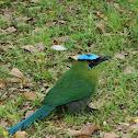 Barranquero, Pájaro Toh o Pájaro Péndulo