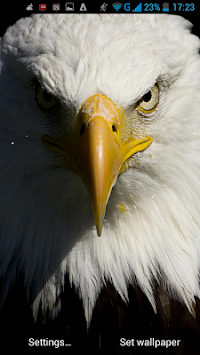 Eagle Live Wallpaper Poster