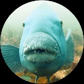 NSW Marine Life