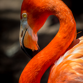 by Victor Martin - Animals Birds ( , colorful, mood factory, vibrant, happiness, January, moods, emotions, inspiration )