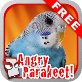 Angry Parakeet Free for Lollipop - Android 5.0