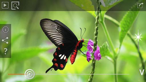 Butterflies Bees