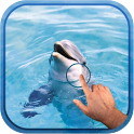 Magic Wave : Cute Dolphin icon