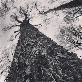 Trees are pretty cool. by Caleb Daniel - Black & White Objects & Still Life (  )