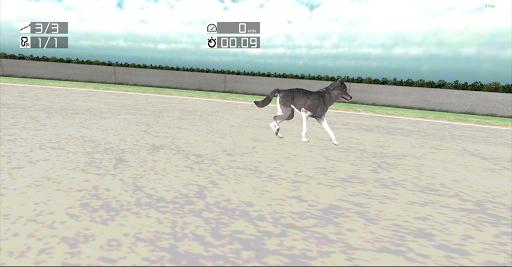 Dog Racing: Siberian Husky