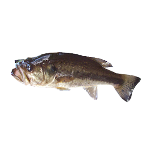 My fishing advisor google play store top apps app annie for My fishing advisor