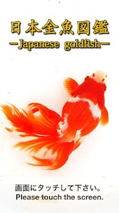 Japanese goldfish- screenshot thumbnail