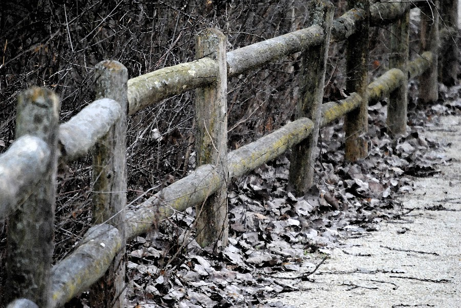 Guided Walkway by Barbara Langfeld - Artistic Objects Other Objects ( fence, illinois, walkway, plainfield, preserve,  )