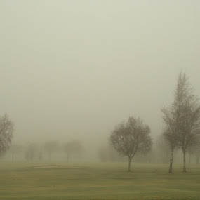 Misty Morn by Andrew Magee - Landscapes Weather ( scotland, nature, tree, landscape, mist )