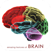 HUMAN BRAIN (PARTS-FUNCTIONS)