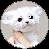 귀여운동물퀴즈