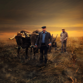 ECO Farming by Matej Skubic - Digital Art People ( eco farming, fog, morning, eco )