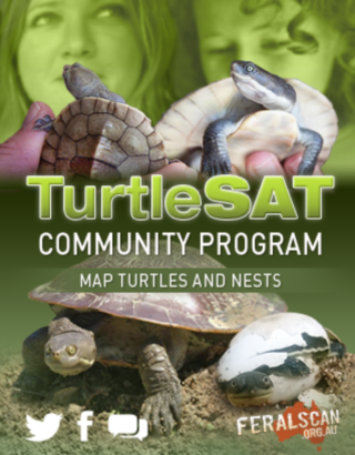TurtleSAT