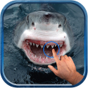 Magic Touch : Shark Attack icon