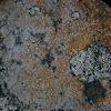 Map lichen?