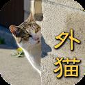 【完全版】東京でのんびり暮らす外猫たち vol.1