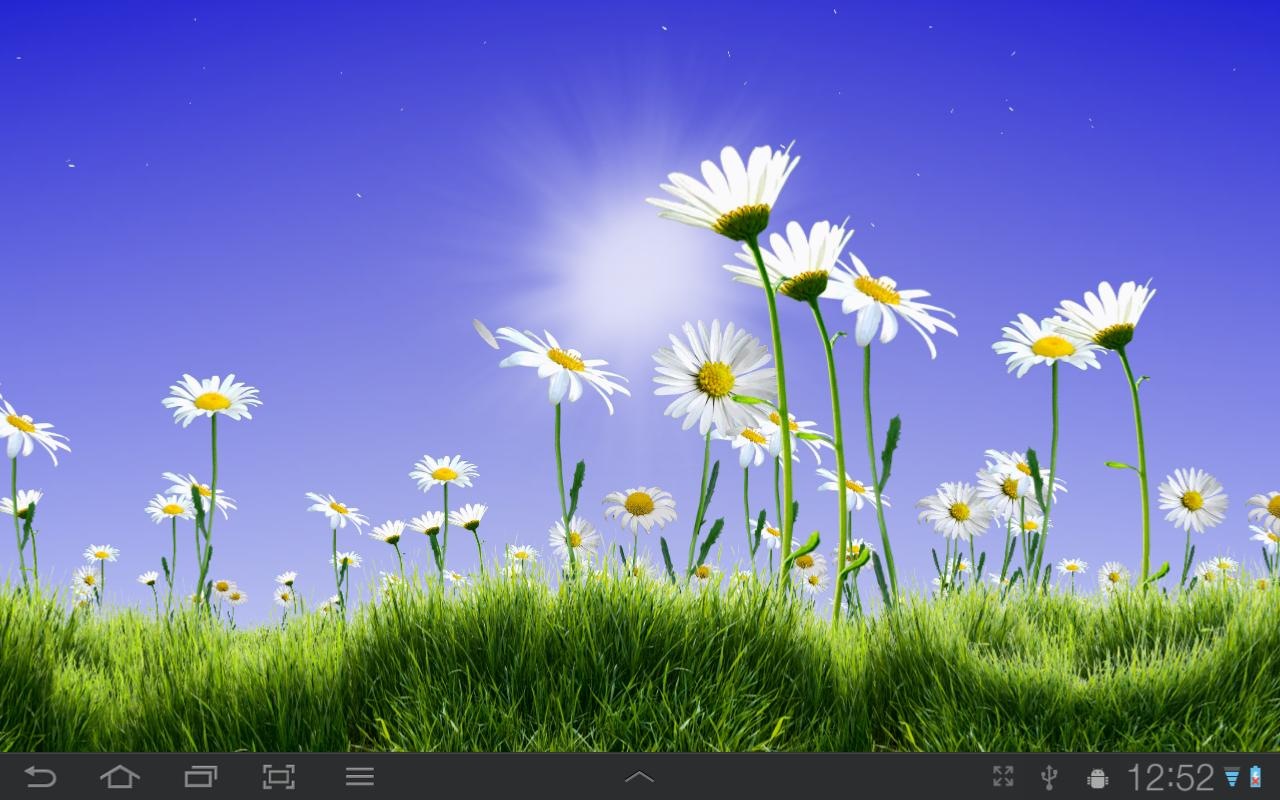 Lovely Daisies Free- screenshot