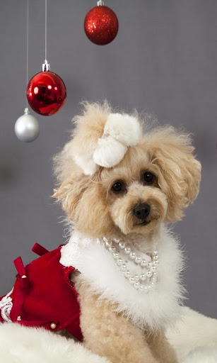 Christmas Dogs Cats wallpaper