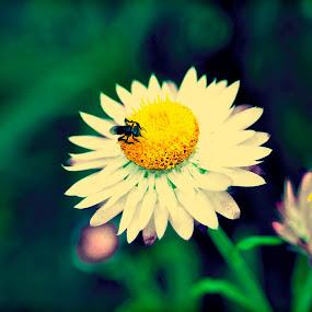 Yellow by Suryani Sabri - Flowers Flower Gardens ( graden, yellow, flowers, flower )