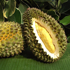 Durian Matching icon