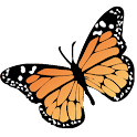 Unified Butterfly Recorder icon