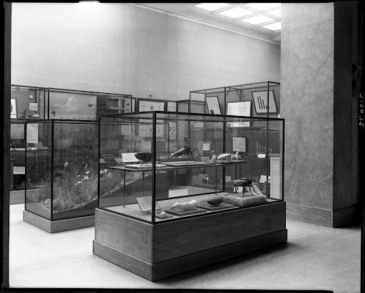 Insect models, Public Health Hall, 1930