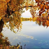 FIUME AUTUNNO LIVE WALLPAPER