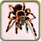 Puzzi puzzles spiders in HD