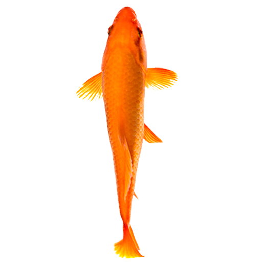 Fish file APK for Gaming PC/PS3/PS4 Smart TV