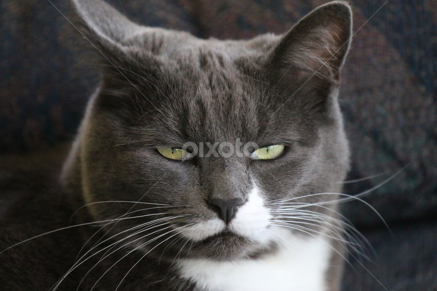 by Dean Perrault - Animals - Cats Portraits