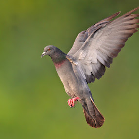 Freedom by Sharad Agrawal - Animals Birds ( nature, rajasthan, udaipur, wildlife, india )